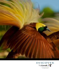 ThE DISCOVER CAMPAIGN - Cornell Lab of Ornithology