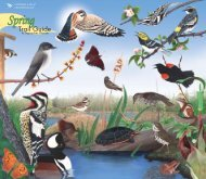 Spring - Cornell Lab of Ornithology
