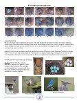 Monitoring Bluebird Nest Boxes - North American Bluebird Society - Page 2