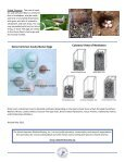 Monitoring Bluebird Nest Boxes - North American Bluebird Society - Page 4