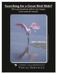 2005 Slide Catalog Web.indd - Cornell Lab of Ornithology