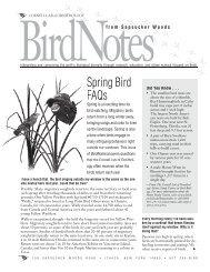 BirdNotes19--Spring Bird FAQs.indd - Cornell Lab of Ornithology