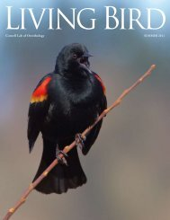 Text and Photographs by Marie Read - Cornell Lab of Ornithology
