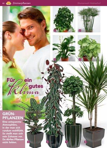 pflanzen - Blumenwelt Hödnerhof