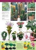 pflanzen - Blumenwelt Hödnerhof - Seite 4