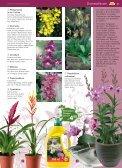 pflanzen - Blumenwelt Hödnerhof - Seite 6