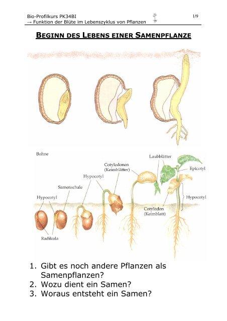 Die Samenpflanzen Lassen Sich In Zwei Unterabteilungen 2