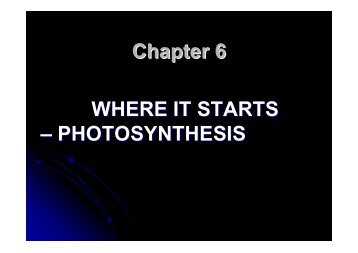 Chapter 6 Powerpoint (PDF)
