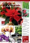 1,99 - floraland arnold - Seite 4