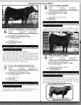Lonely Valley Seedstock - Page 7