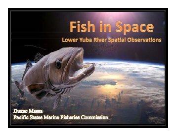 Duane_Massa_Fish_in_Space - Lower Yuba River Accord
