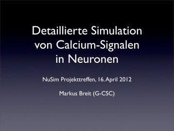 Detaillierte Simulation von Calcium-Signalen in Neuronen