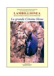 La grande Cétoine bleue - site aberlentomo.fr