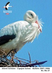 Storch Schweiz · Cigogne Suisse Bulletin 2007 / 2008 Nr. / No 37
