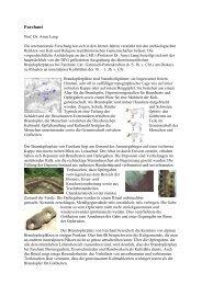 Nähere Informationen über das Projekt in Farchant