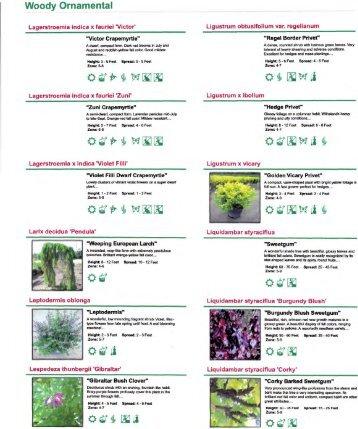 Woody Ornamental - Terra Flora Landscaping