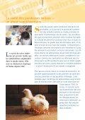 L'oeuf suisse a un plus… - GalloSuisse - Page 4