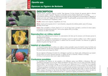 Opuntia spp. Oponces ou Figuiers de Barbarie