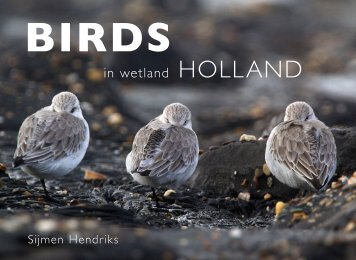 Birds in wetland Holland Preview