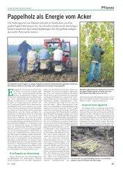Pappelholz als Energie vom Acker - Wald-Zentrum