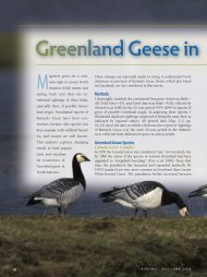 Greenland Geese in North America - American Birding Association