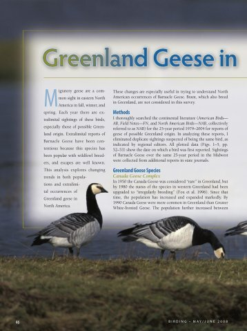Greenland Geese in North America - American Birding Association