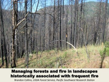 Managing forests and fire in landscapes historically associated with ...