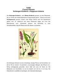 Teil52 (Tracht) Pflanzen Schlangen-Knöterich Polygonum bistorta