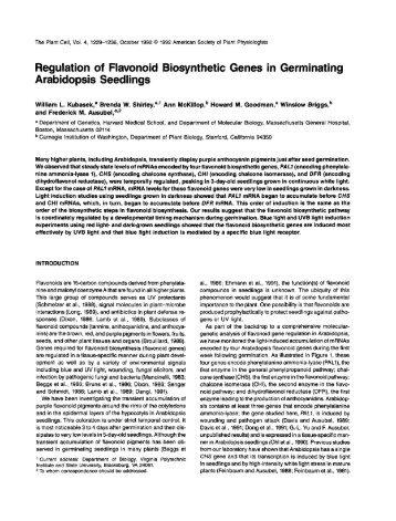 Regulation of Flavonoid Biosynthetic Genes in ... - Ausubel Lab