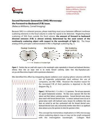 SHG Microscopy