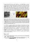 SHG Microscopy - Page 2