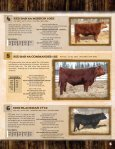 red angus - Page 7