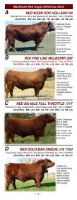 red angus - Page 5