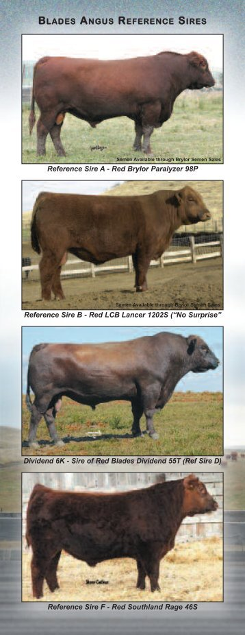 BLADES ANGUS REFERENCE SIRES