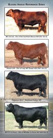 BLADES ANGUS REFERENCE SIRES - Page 2