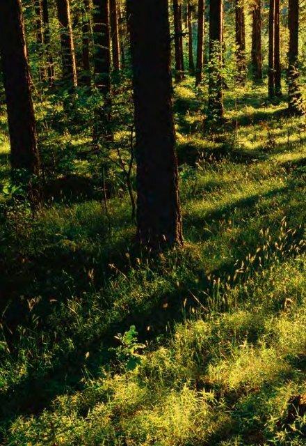 familjeskogsbruket-erbjuder