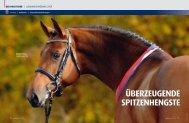 der holsteiner - Pferd+Sport