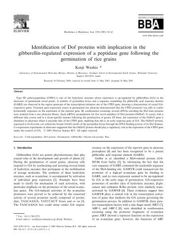 Identi¢cation of Dof proteins with implication in the gibberellin ...