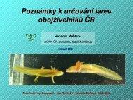 pdf-larvy