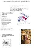 syyskuu 2012 - Vanhankartanon Omakotiyhdistys ry - Page 2