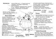 Hirnnerven Obere Extremität Untere Extremität Eigenreflexe Thorax ...
