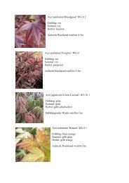 Acer palmatum'Bloodgood' WG 8.1 Frühling: rot Sommer: rot Herbst ...