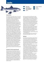 Lachs - Fisch