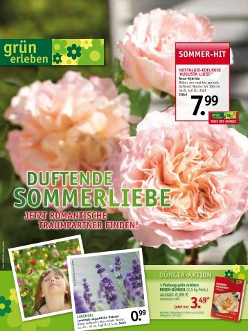 sommer-hit - Gartencenter Odenwald