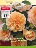 sommer-hit - Gartencenter Odenwald - Seite 4