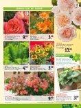 sommer-hit - Gartencenter Odenwald - Seite 5