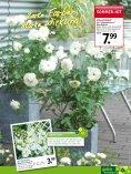sommer-hit - Gartencenter Odenwald - Seite 7