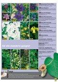 Kletterpflanzen Sonnige und halbschattige Standorte - Seite 2