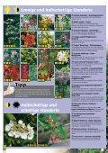 Kletterpflanzen Sonnige und halbschattige Standorte - Seite 3