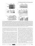 Journal of Biological Chemistry - ResearchGate - Page 5